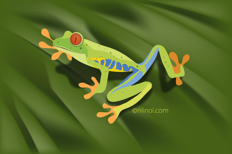The amazon red-eyed-tree-frog